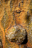 Tree Trunk Abstract II