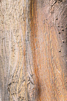 Tree Trunk Abstract III